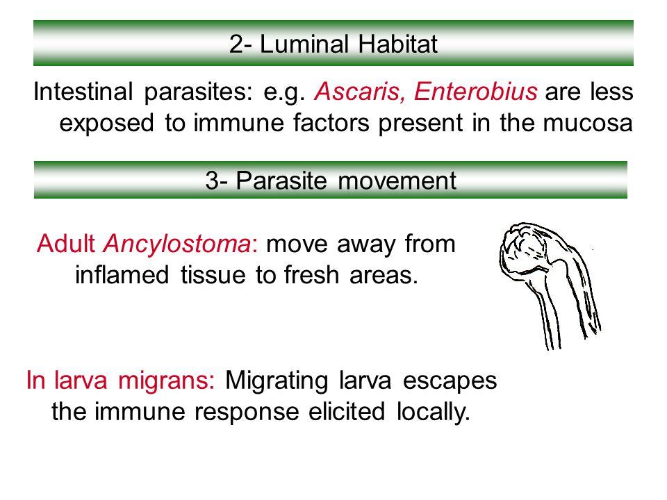2- Luminal Habitat Intestinal parasites: e.g. Ascaris, Enterobius are less exposed to immune factors present in the mucosa 3- Parasite movement Adult