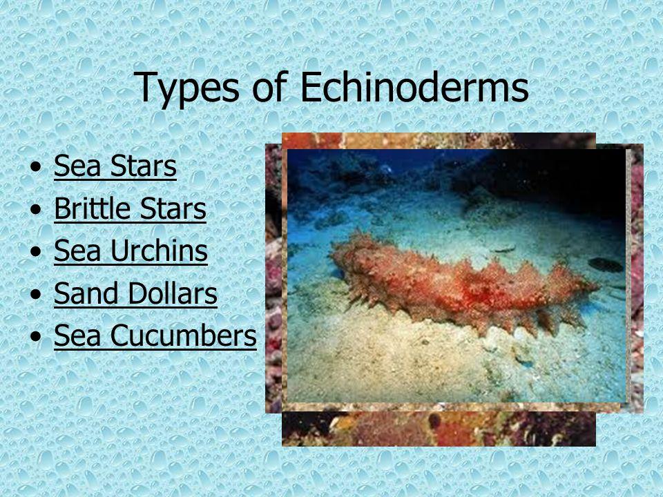 Types of Echinoderms Sea Stars Brittle Stars Sea Urchins Sand Dollars Sea Cucumbers