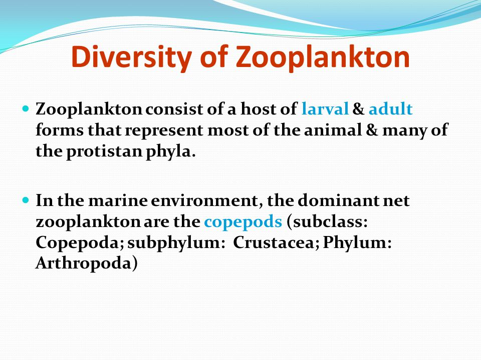 Diversity of Zooplankton Zooplankton consist of a host of larval & adult forms that represent most of the animal & many of the protistan phyla. In the
