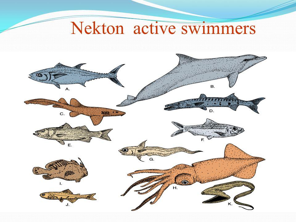 Nekton active swimmers