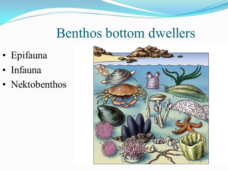 Benthos bottom dwellers Epifauna Infauna Nektobenthos