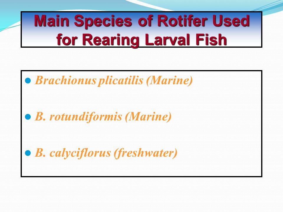 Brachionus plicatilis (Marine) B.rotundiformis (Marine) B.