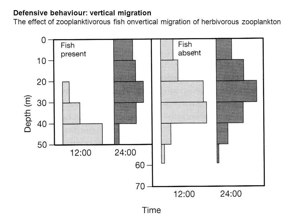 Defensive behaviour: vertical migration The effect of zooplanktivorous fish onvertical migration of herbivorous zooplankton