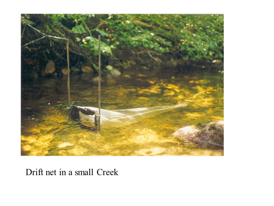 Drift net in a small Creek