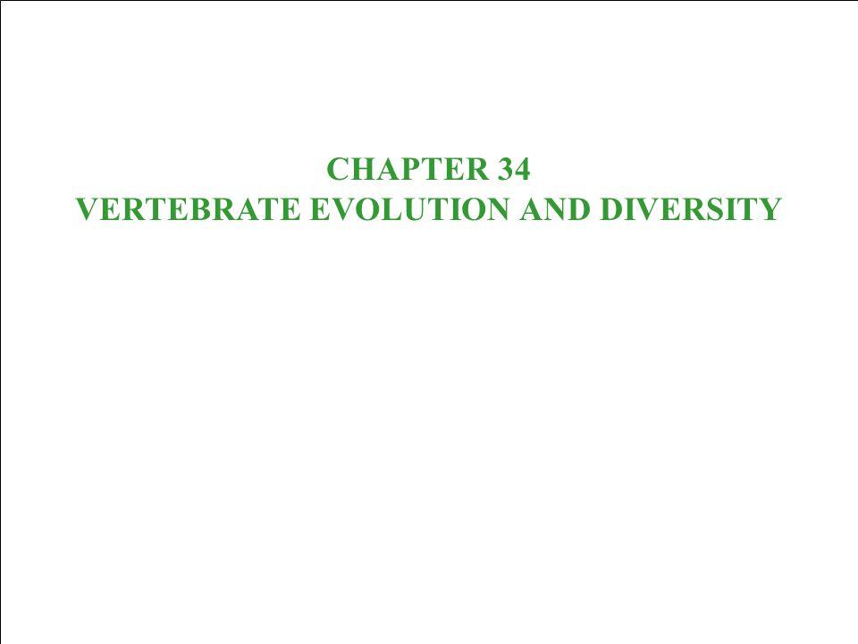 CHAPTER 34 VERTEBRATE EVOLUTION AND DIVERSITY