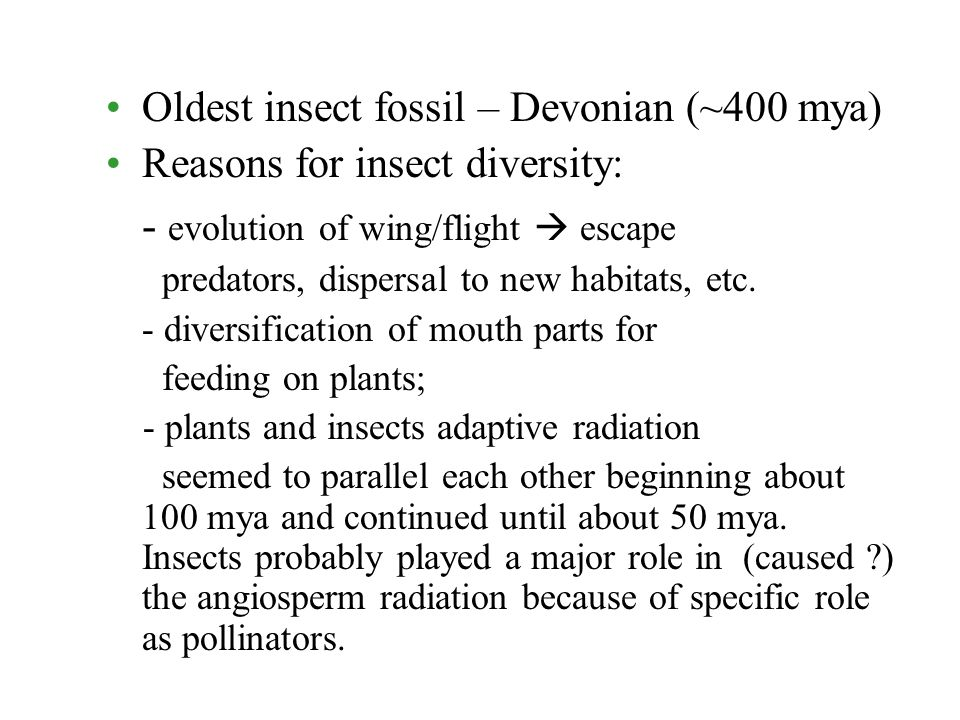 Insect Fossils And Evolution Oldest Insect Fossil