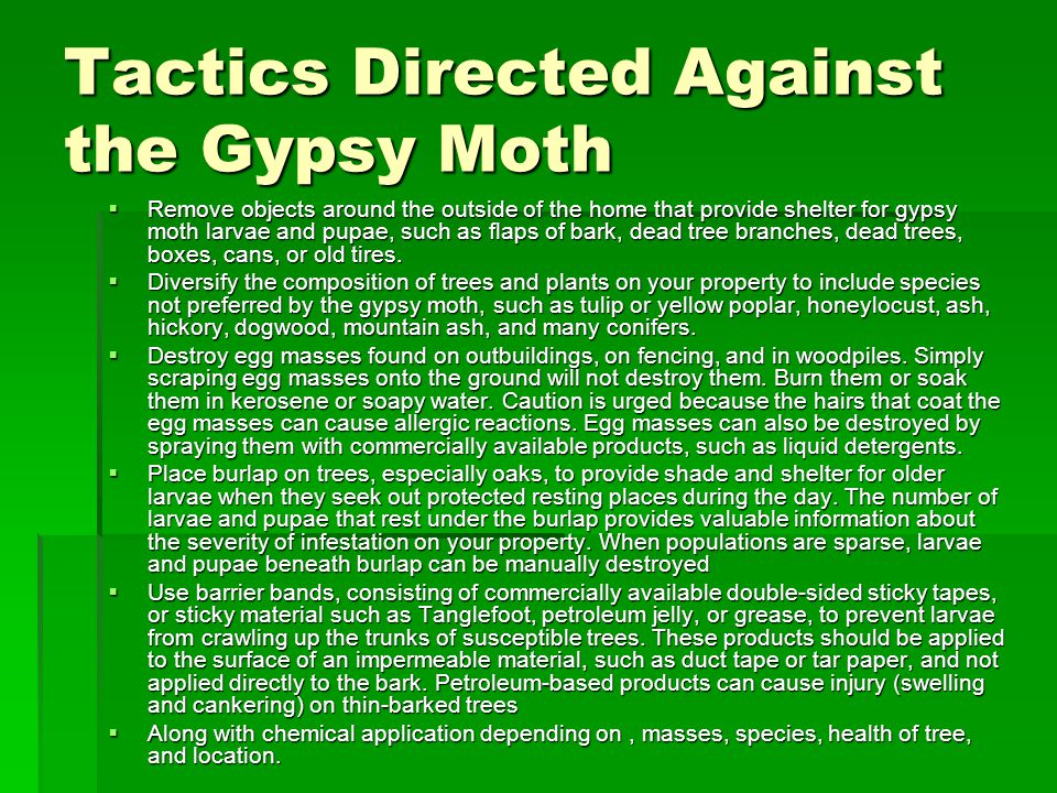 Tactics Directed Against the Gypsy Moth  Remove objects around the outside of the home that provide shelter for gypsy moth larvae and pupae, such as