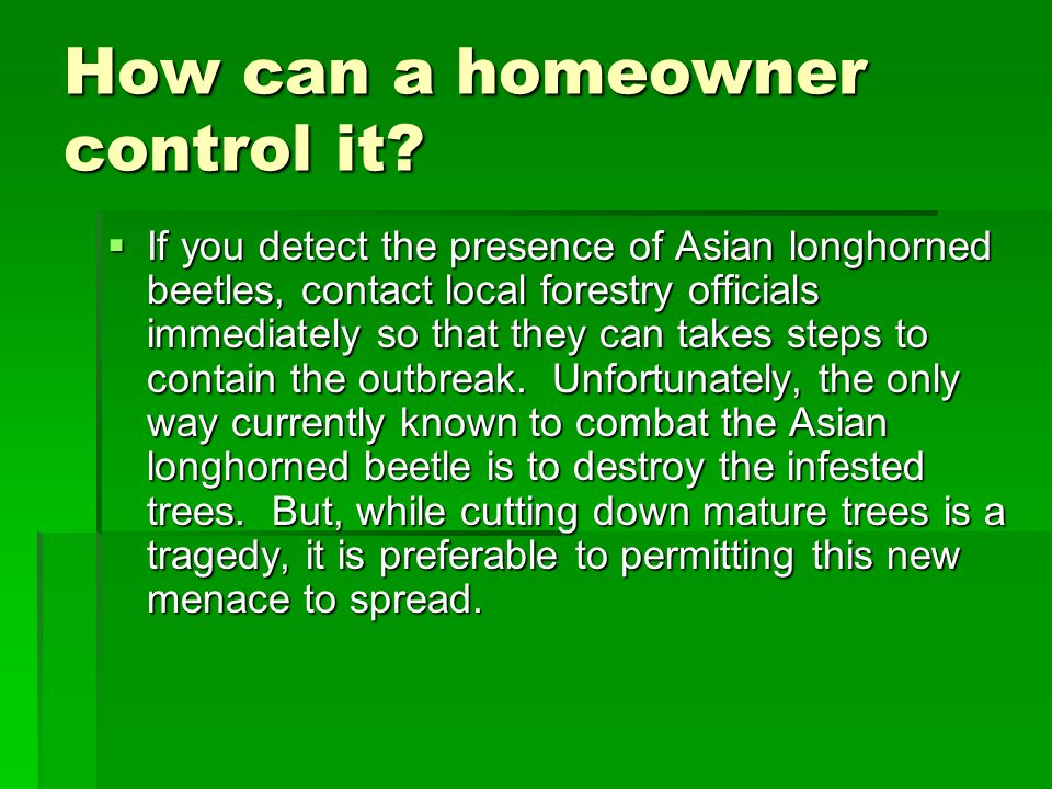 How can a homeowner control it?  If you detect the presence of Asian longhorned beetles, contact local forestry officials immediately so that they ca