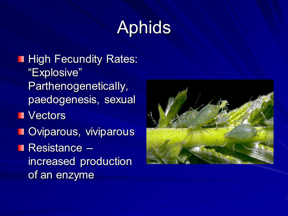 Aphids High Fecundity Rates: Explosive Parthenogenetically, paedogenesis, sexual Vectors Oviparous, viviparous Resistance – increased production of an enzyme