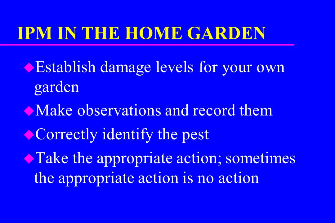 IPM IN THE HOME GARDEN u Establish damage levels for your own garden u Make observations and record them u Correctly identify the pest u Take the appropriate action; sometimes the appropriate action is no action