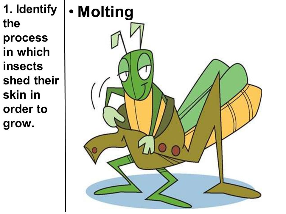 1. Identify the process in which insects shed their skin in order to grow. Molting