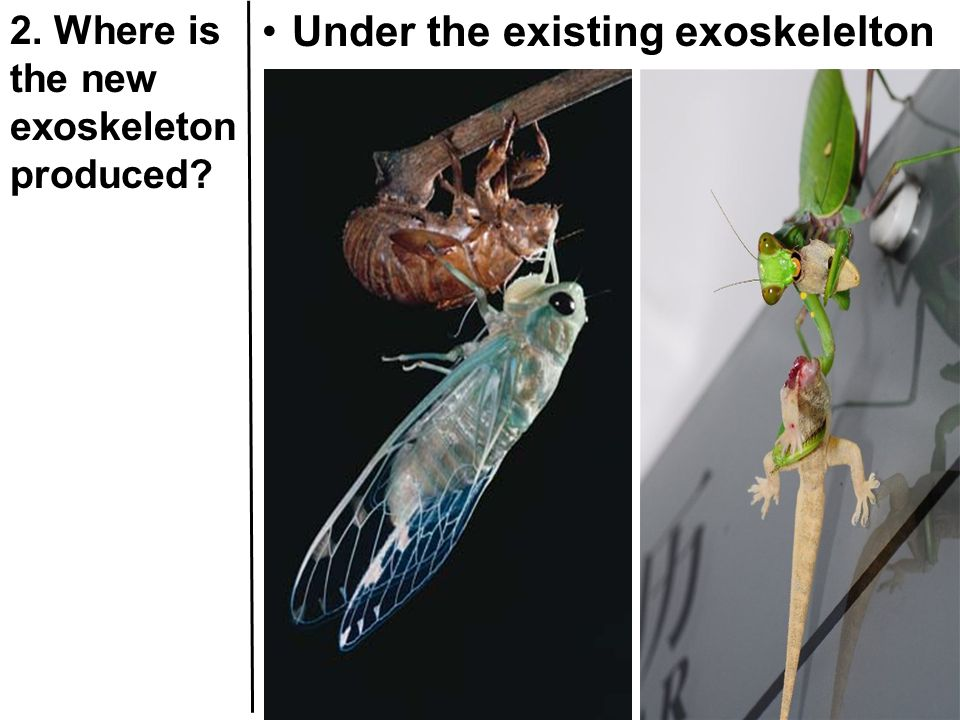 2. Where is the new exoskeleton produced? Under the existing exoskelelton