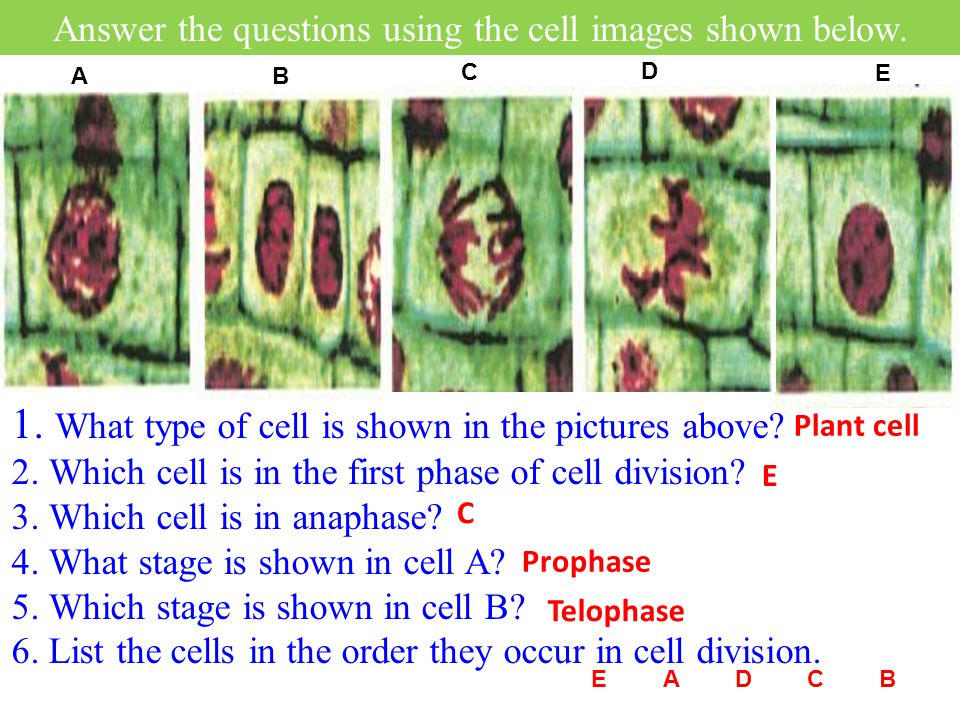 8.What occurs before a nymph develops into an adult.