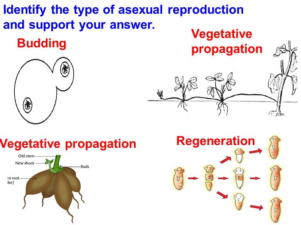http://www.brainpop.com/science/ecologyandbeh avior/metamorphosis/fyi/