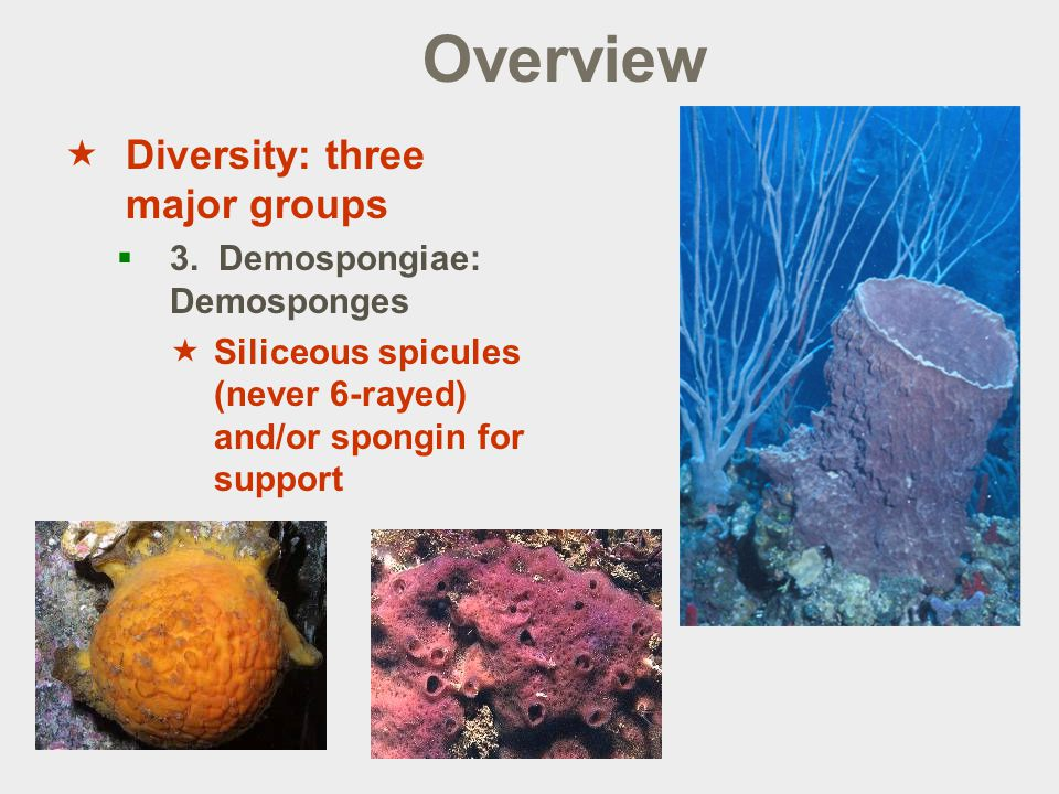 Overview  Diversity: three major groups  3.