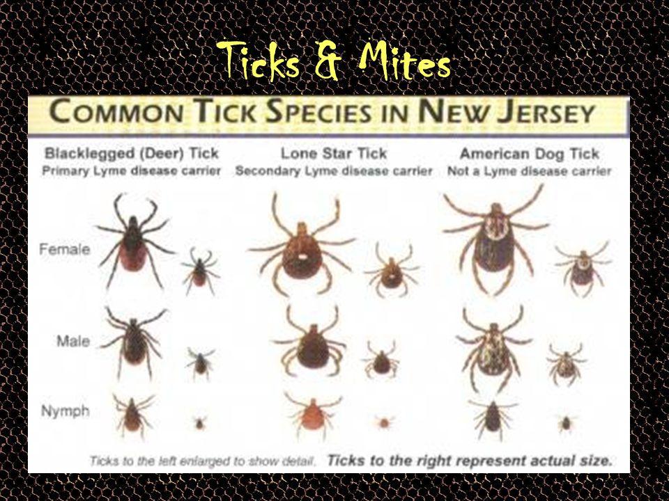 Ticks & Lyme Disease…