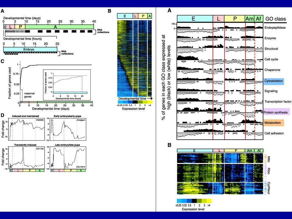 Developmentally-Regulated Gene Expression