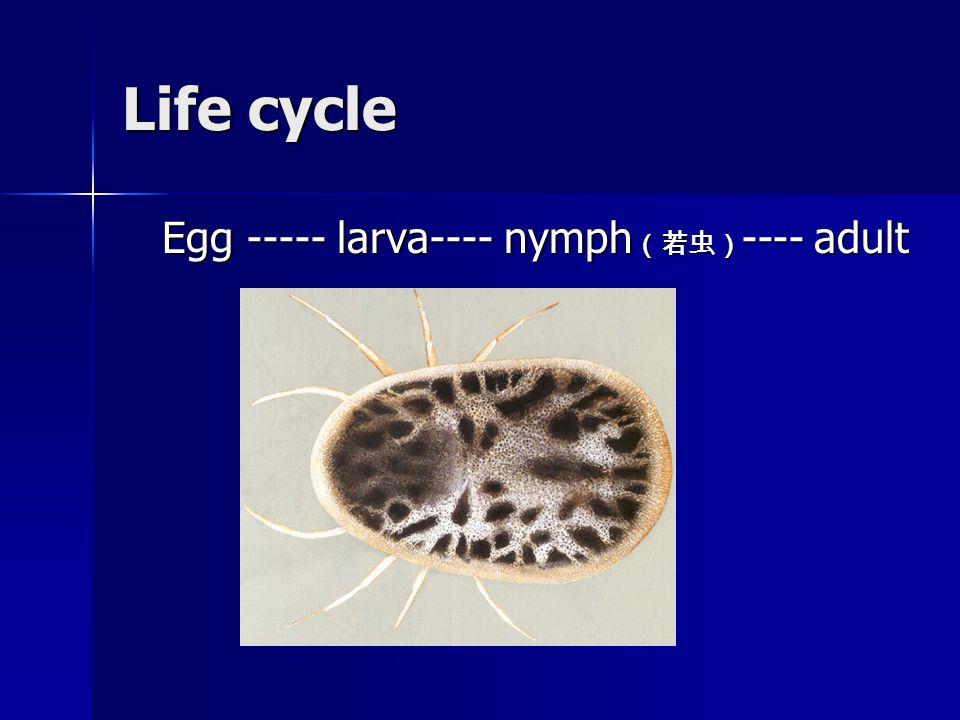 Life cycle Egg ----- larva---- nymph (若虫) ---- adult Egg ----- larva---- nymph (若虫) ---- adult
