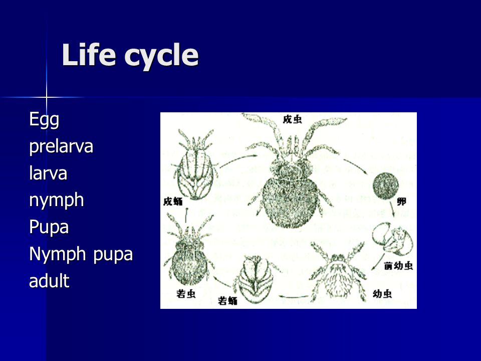 Life cycle EggprelarvalarvanymphPupa Nymph pupa adult