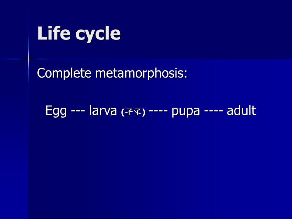 Life cycle Complete metamorphosis: Egg --- larva ( 孑孓 ) ---- pupa ---- adult Egg --- larva ( 孑孓 ) ---- pupa ---- adult