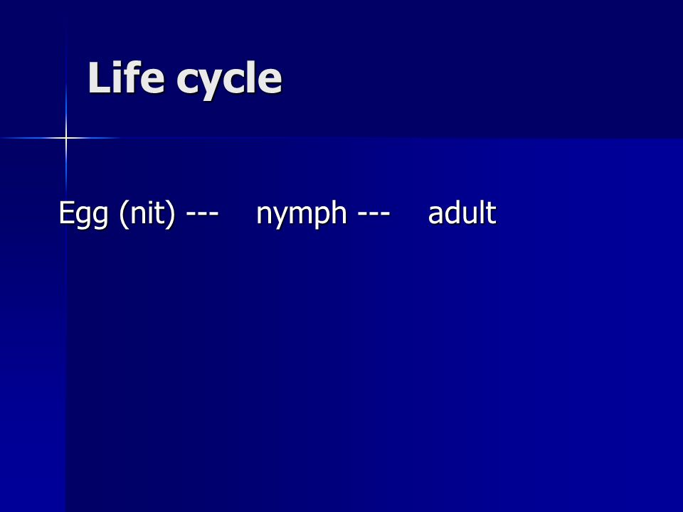 Life cycle Egg (nit) --- nymph --- adult