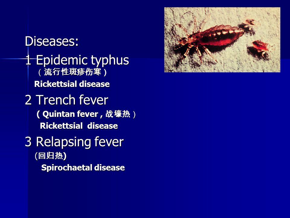 Diseases: 1 Epidemic typhus (流行性斑疹伤寒) Rickettsial disease Rickettsial disease 2 Trench fever ( Quintan fever, 战壕热) ( Quintan fever, 战壕热) Rickettsial disease Rickettsial disease 3 Relapsing fever ( 回归热 ) ( 回归热 ) Spirochaetal disease Spirochaetal disease