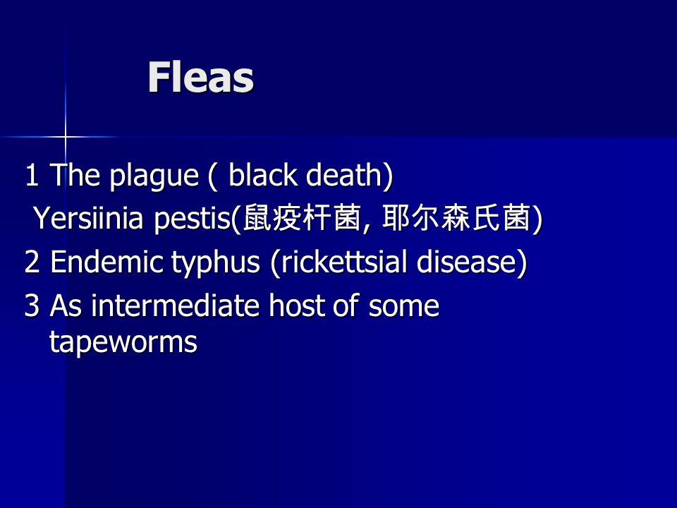 Fleas Fleas 1 The plague ( black death) Yersiinia pestis( 鼠疫杆菌, 耶尔森氏菌 ) Yersiinia pestis( 鼠疫杆菌, 耶尔森氏菌 ) 2 Endemic typhus (rickettsial disease) 3 As intermediate host of some tapeworms