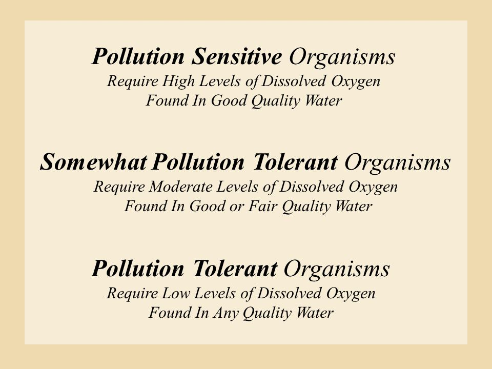 Pollution Sensitive Organisms Require High Levels of Dissolved Oxygen Found In Good Quality Water Somewhat Pollution Tolerant Organisms Require Modera
