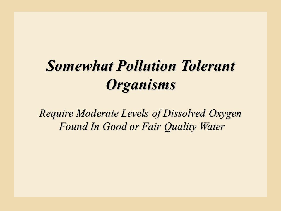 Somewhat Pollution Tolerant Organisms Require Moderate Levels of Dissolved Oxygen Found In Good or Fair Quality Water