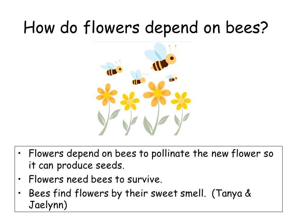 How do flowers depend on bees.