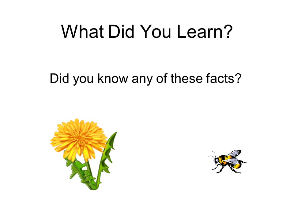 What Did You Learn Did you know any of these facts