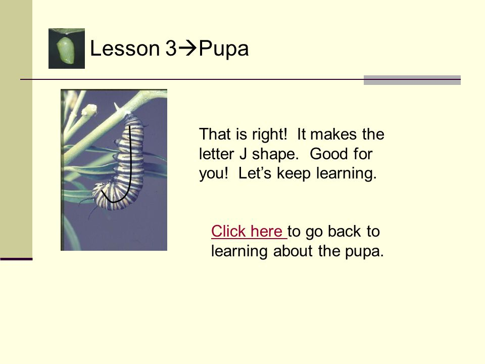 Lesson 3  Pupa Oops! It is not the letter g. Try again. Think of your abc chart. Click here Click here to try again.