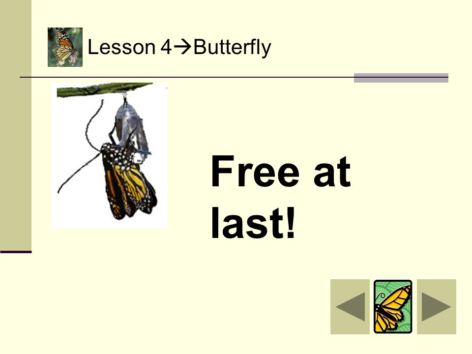 Lesson 4  Butterfly The butterfly is ready to come out of its chrysalis! Now here comes the hard work. It wiggles… It wobbles… It works to get…