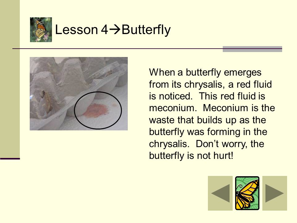 Lesson 4  Butterfly Free at last!