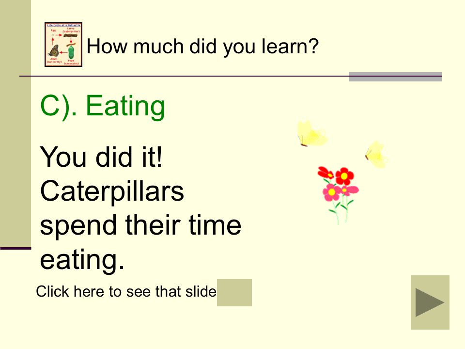 How much did you learn? B). Flying Oops! Caterpillars cannot fly yet. Click to review. Click to try again.