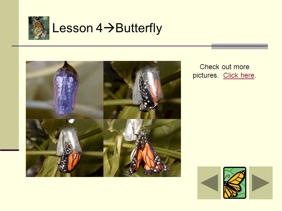 Super job! You are done! I hope you enjoyed going through the life cycle of a butterfly. Please click the button so the next student can learn about a