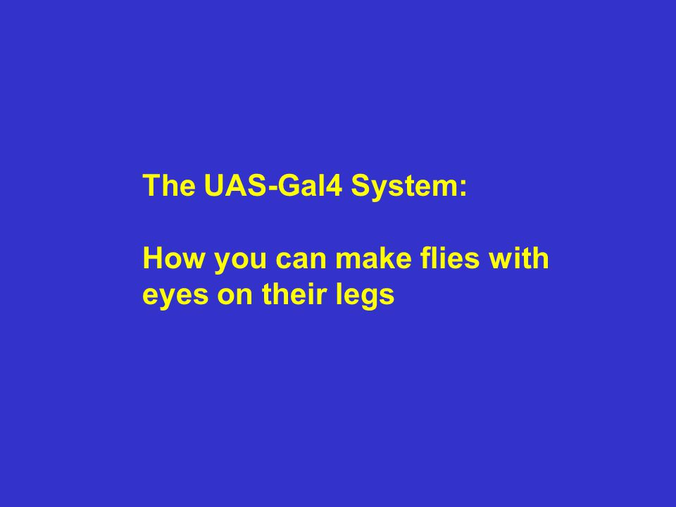 The UAS-Gal4 System: How you can make flies with eyes on their legs