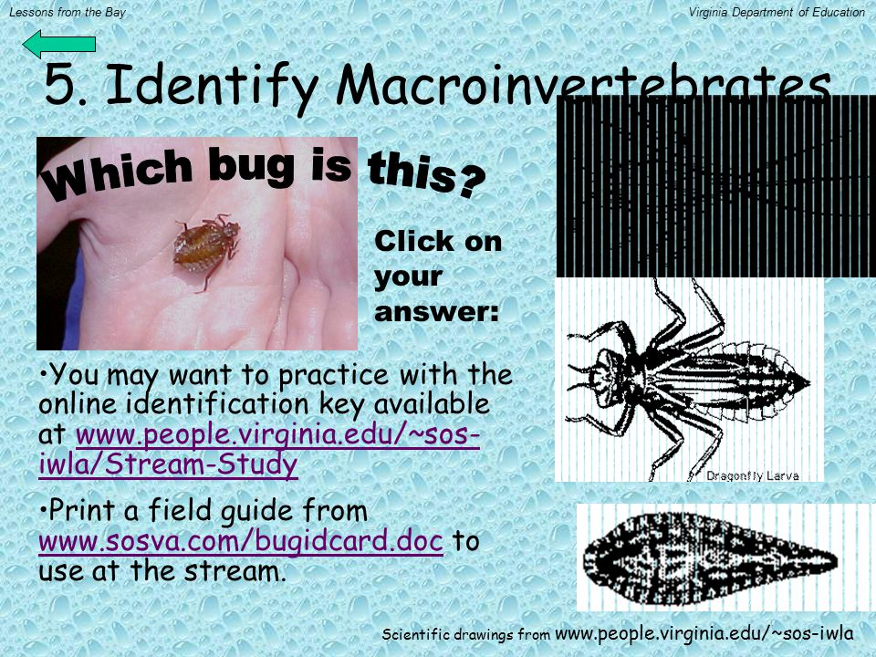 5. Identify Macroinvertebrates You may want to practice with the online identification key available at www.people.virginia.edu/~sos- iwla/Stream-Stud