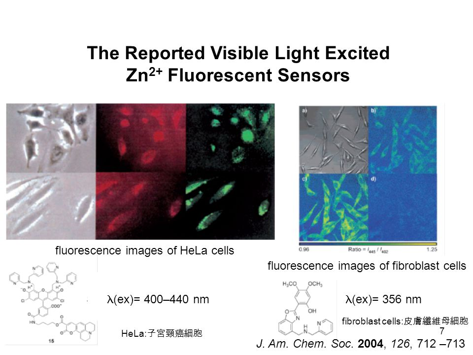 7 fluorescence images of fibroblast cells The Reported Visible Light Excited Zn 2+ Fluorescent Sensors fluorescence images of HeLa cells (ex)= 400–440