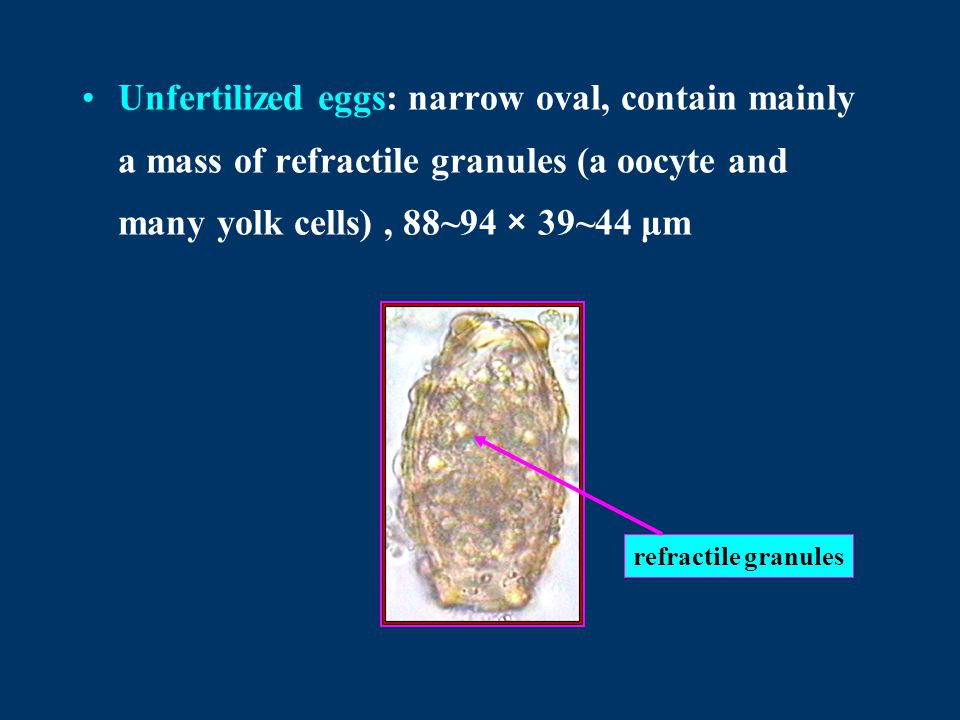 Unfertilized eggs: narrow oval, contain mainly a mass of refractile granules (a oocyte and many yolk cells), 88~94 × 39~44 μm refractile granules