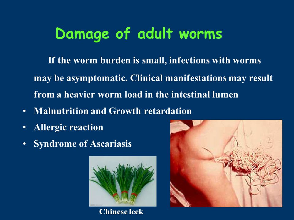 Damage of adult worms If the worm burden is small, infections with worms may be asymptomatic.