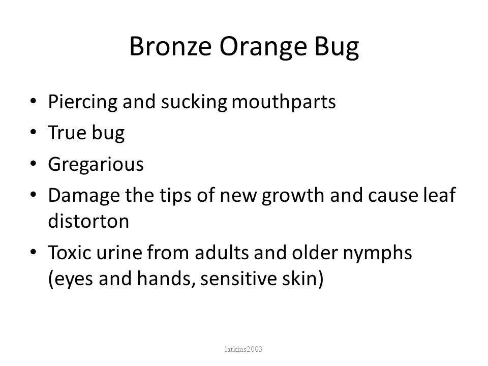 Bronze Orange Bug Piercing and sucking mouthparts True bug Gregarious Damage the tips of new growth and cause leaf distorton Toxic urine from adults and older nymphs (eyes and hands, sensitive skin) latkins2003