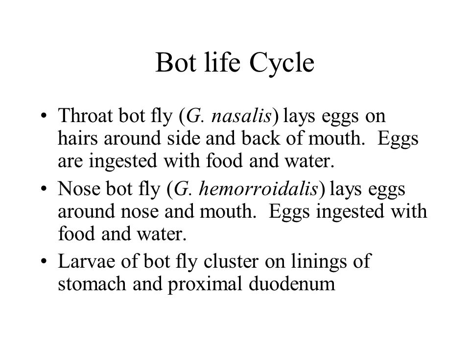 Bot life Cycle Throat bot fly (G.nasalis) lays eggs on hairs around side and back of mouth.