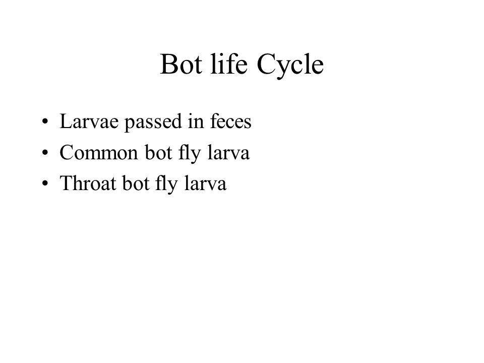 Bot life Cycle Larvae passed in feces Common bot fly larva Throat bot fly larva
