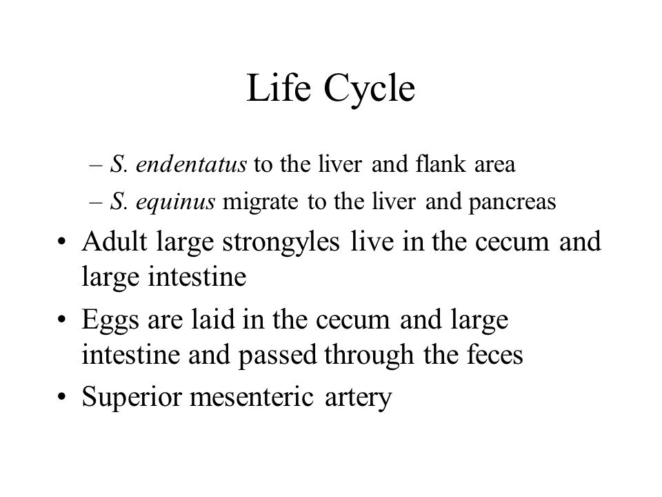 Life Cycle –S.endentatus to the liver and flank area –S.