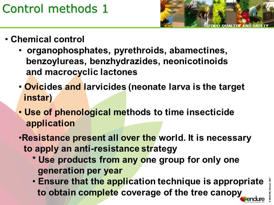 © ENDURE, February 2007 FOOD QUALITY AND SAFETY © ENDURE, February 2007 FOOD QUALITY AND SAFETY Control methods 1 Chemical control organophosphates, pyrethroids, abamectines, benzoylureas, benzhydrazides, neonicotinoids and macrocyclic lactones Ovicides and larvicides (neonate larva is the target instar) Use of phenological methods to time insecticide application Resistance present all over the world.