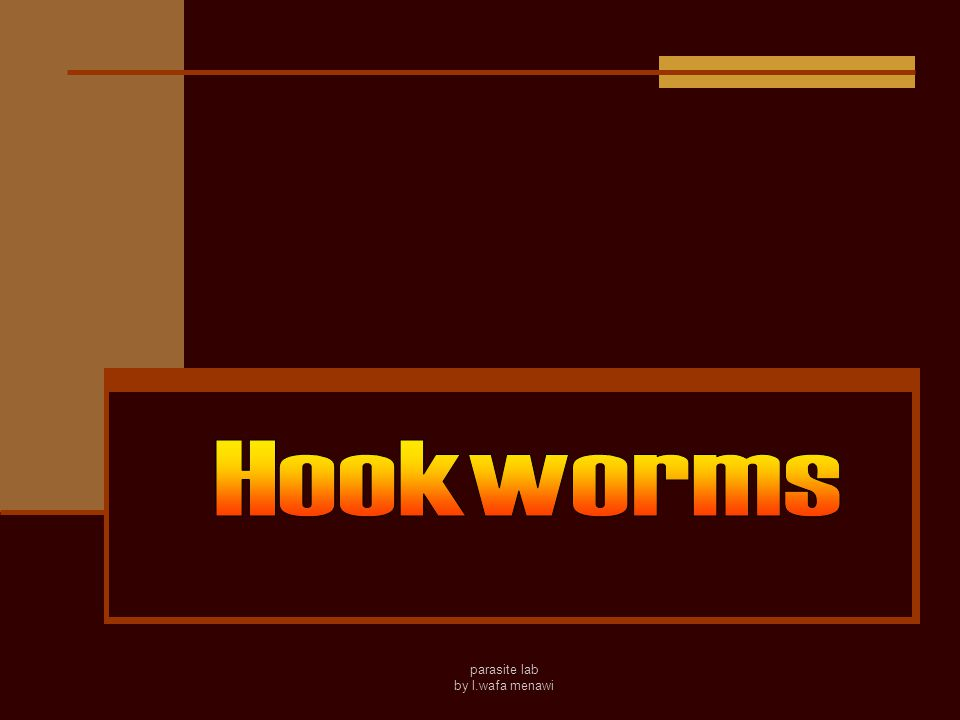 Hookworms The hookworms cause hookworm disease, which is one of the five major parasitic disease in China(malaria, shistosomiasis, filariasis, kala- azar and hookworm disease).