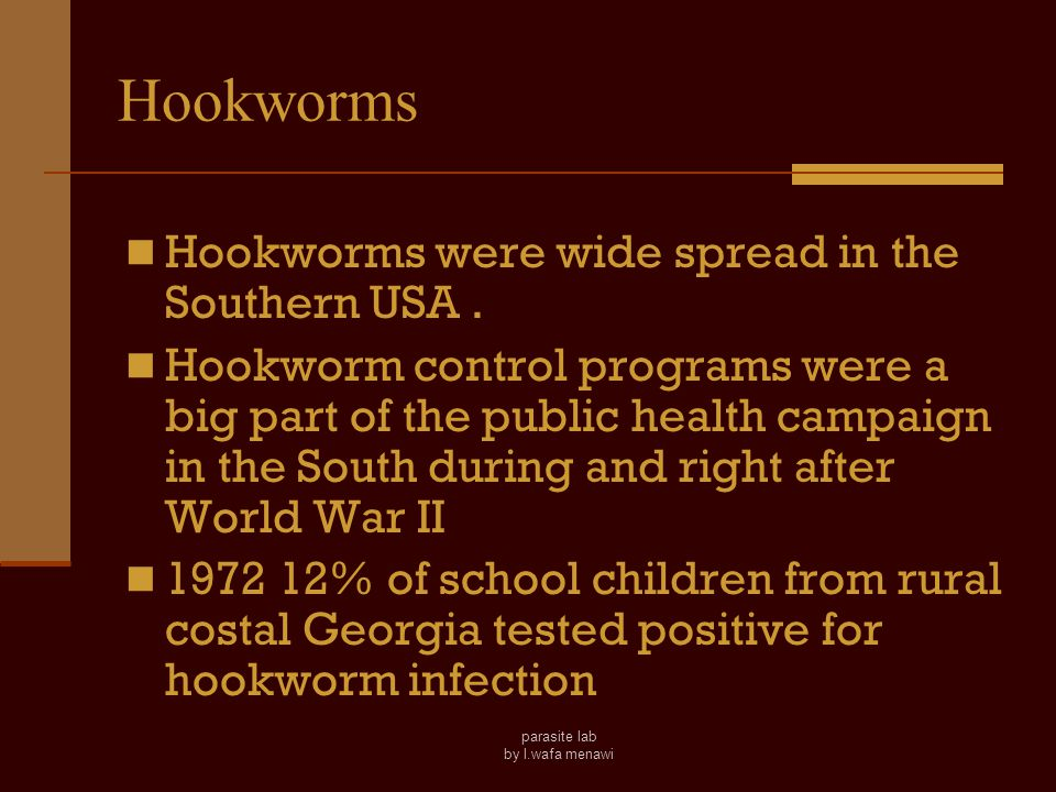 parasite lab by l.wafa menawi The Morphological Differences between Two species of Hookworms _____ A.