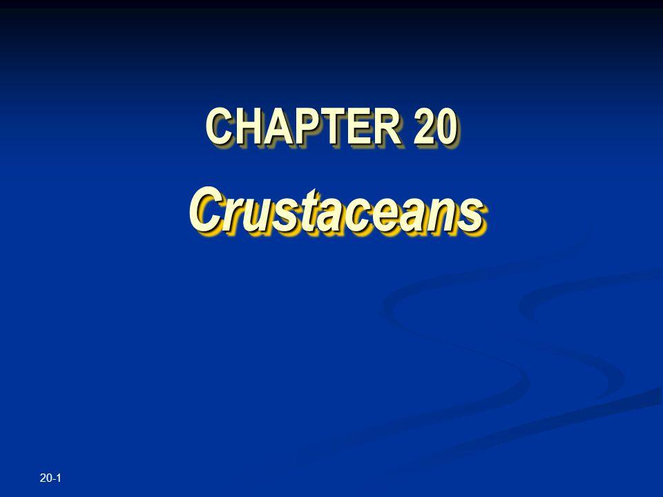 20-1 CHAPTER 20 Crustaceans Crustaceans