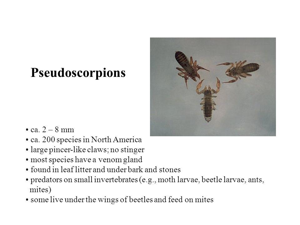 Pseudoscorpions ca. 2 – 8 mm ca.